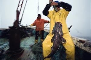 Sea-bass-hooked