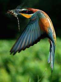 5-birds