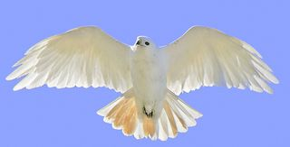 Albinored tail