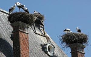 Storknest