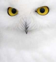 Owl1b_111107