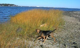 Quonsetdog