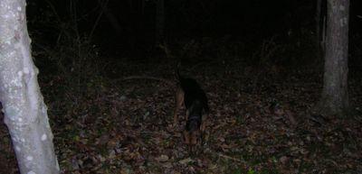 Nighthound