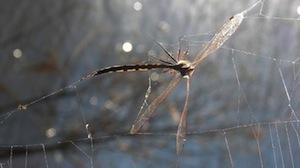 Flyweb