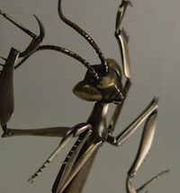 Metalinsect