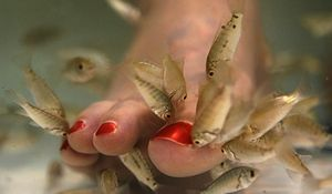 Fishpedicure