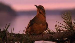 Peaksbird