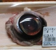 Eyeball1tuna_1