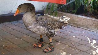 Goose SANDALS