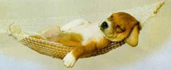 Puppy-hammock