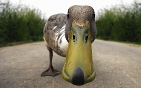Duckclose