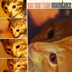 Moondancecat