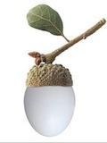 Eggcorn539__1285353471_8744