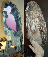 Owlfeathers