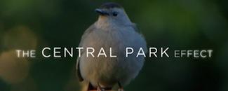 Central-park-effect