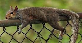 Squirrel_080204