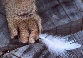 Cat-reducing-bird-population