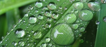 Rain-drop-on-grass-wallpapers