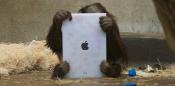 Orangutan-with-ipad-640x353