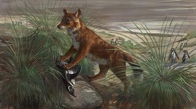 Fiwolf