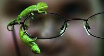 Chameleons_052605