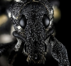 Galpbugs