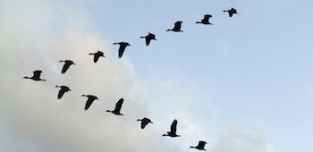 O-BIRD-V-facebook