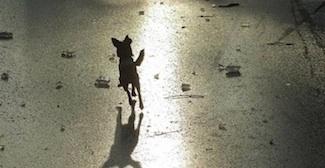 Dogice1