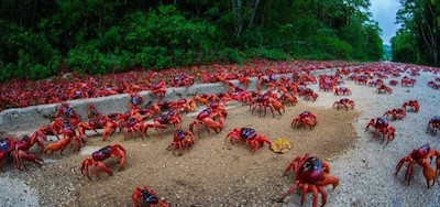 Crabs-670-665x385