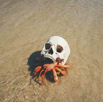 Hermit_crab_skull_faux