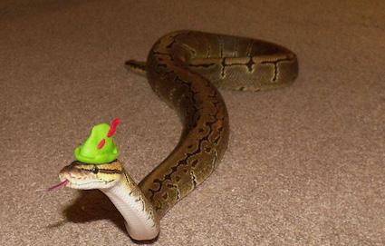 Snakes-wearing-tiny-hats-06