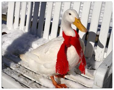 Penelope-scarf1-frame