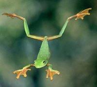 Glidingfrog0