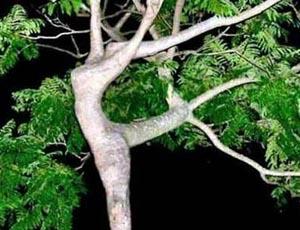 Treedance_2