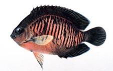 Mysteryfish