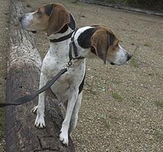 2headedhound_pg