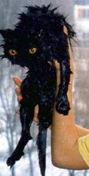Wet_pussy_cats_6