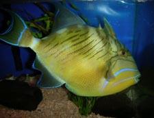 Lucyfish