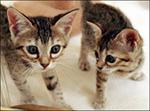 Clone_cat