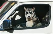 Dogglasses