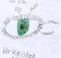 Kristeneye_1