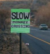 Monkeyxing