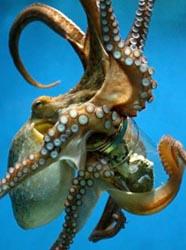 Octopus_031403