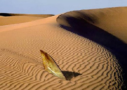 Sandshark