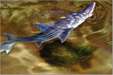 Sharkpeek