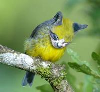 Sparrowmeow