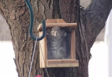 Squirrelbox