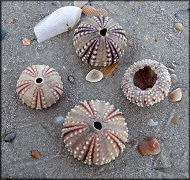 Urchintests