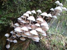 Whiteshrooms